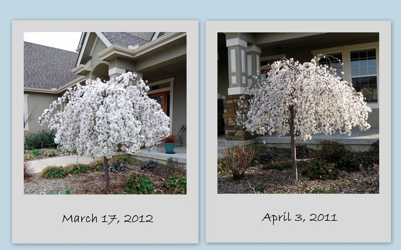 Garden 20121