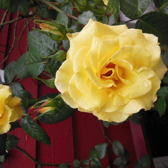 image from http://talltalesfromkansas.typepad.com/.a/6a01538dee917a970b01774301de82970d-pi
