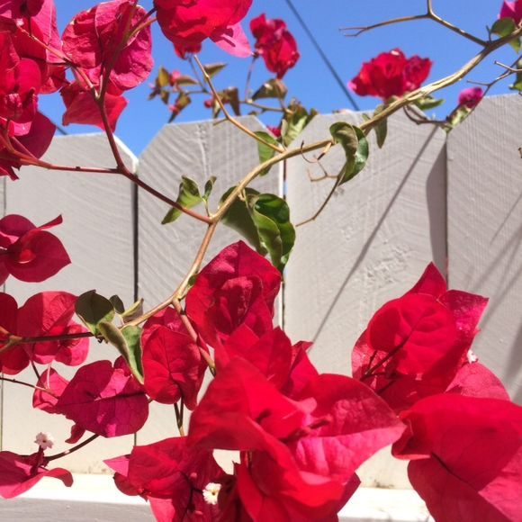 image from http://talltalesfromkansas.typepad.com/.a/6a01538dee917a970b01a3fd1d8567970b-pi