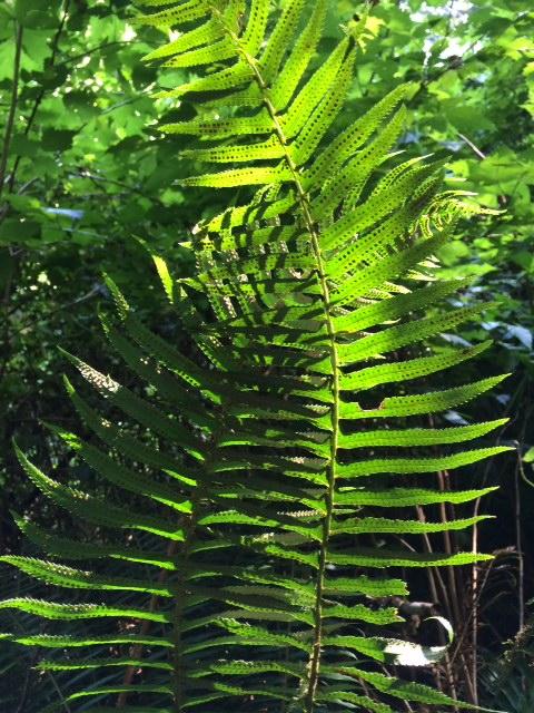 image from http://talltalesfromkansas.typepad.com/.a/6a01538dee917a970b01b7c7ba41c9970b-pi