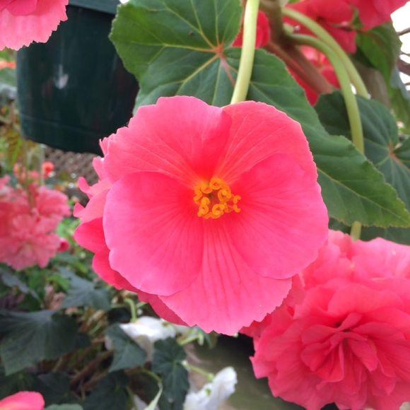 image from http://talltalesfromkansas.typepad.com/.a/6a01538dee917a970b01bb08750a53970d-pi